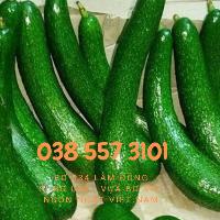 Vựa Bơ 034 Lâm Đồng