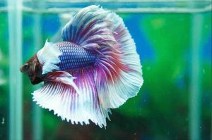 Vinh Aquarium Phan Thiet