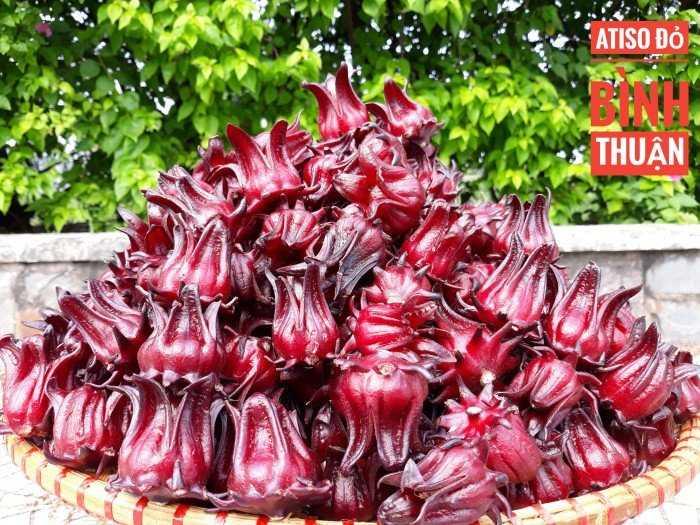 Atiso Đỏ Bình Thuận