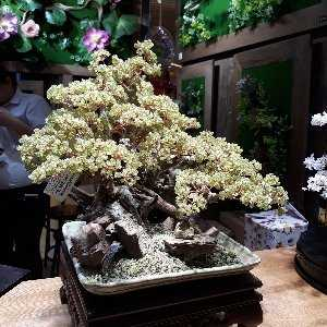 Phạm Trung Phương