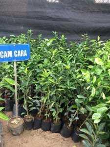 Cây Giống Đất Việt