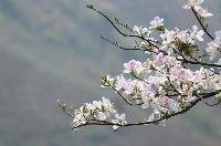Hình đại diện Vũ Trần Nguyên