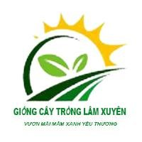 Vũ Thị Kim Thúy