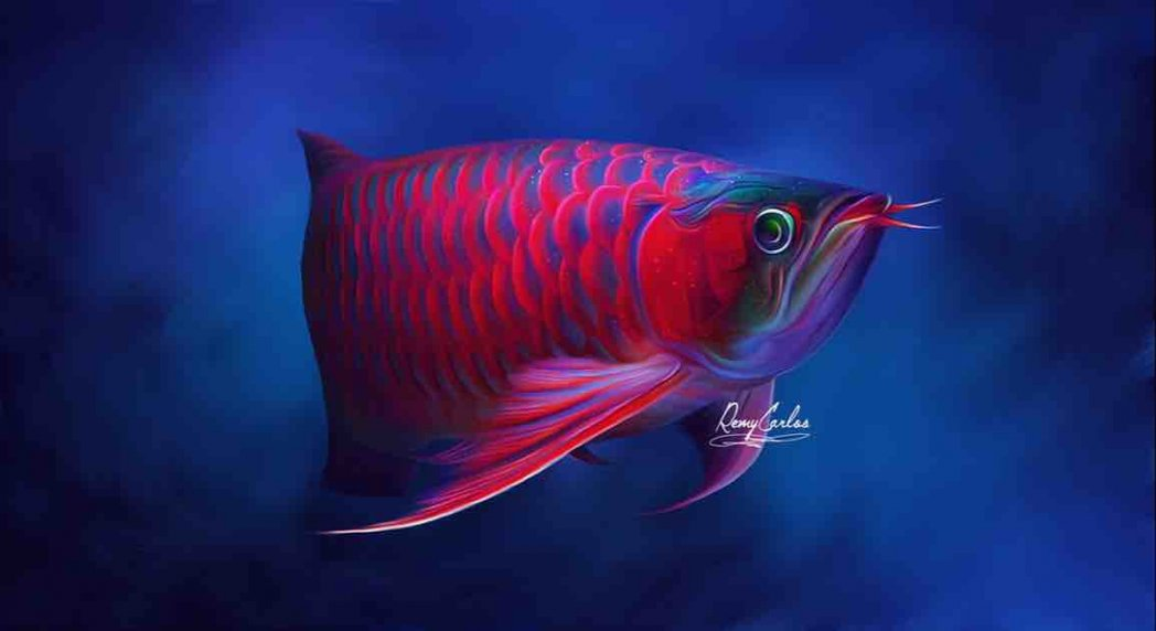 Hình ảnh bìa Vinh Aquarium Phan Thiet