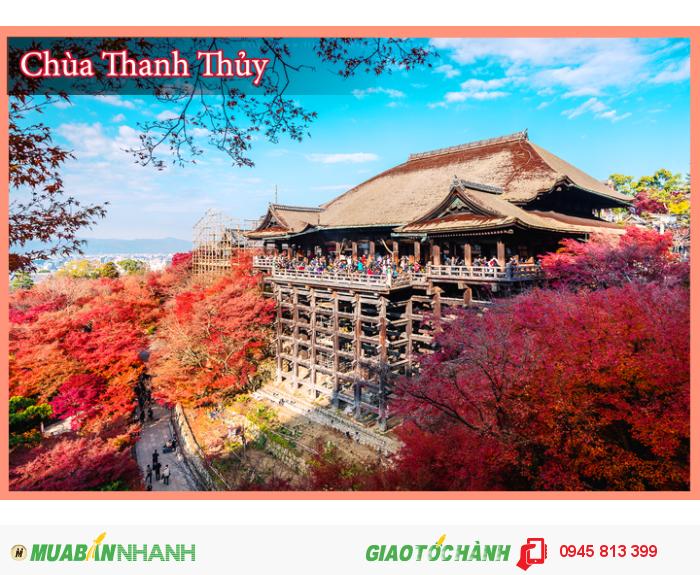 Tour trọn gói Hành Trình Vàng Nhật Bản: Mùa Lá Đỏ (7N/6Đ)