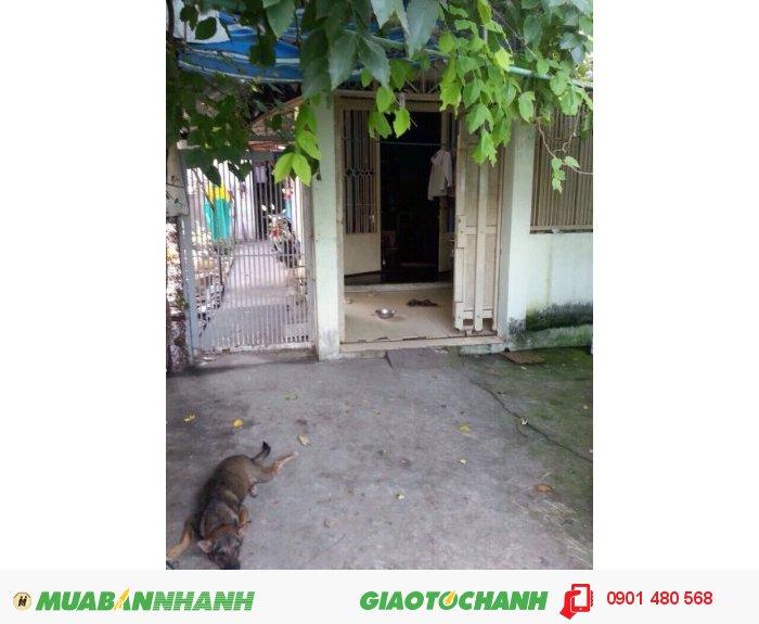 Cần tiền bán gấp nhà cấp 4 đường Nguyễn Văn Lượng, Phường 16, Quận Gò Vấp. DT 160m2