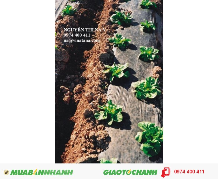 Màng phủ nông nghiệp, màng lót hồ thủy sản giá hấp dẫn
