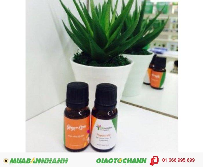 Tinh dầu Ginger Lime (Chanh Sần)|Mã sản phẩm: TD04010C | Giá bán: 235.000 | Dung tích: 10ml | Mô tả: Tinh dầu chanh sần có mùi hương thanh khiết, tươi mát có tác dụng thanh lọc không khí, diệt khuẩn, loại bỏ căng thẳng hiệu quả.Tác dụng trên da: giải độc cơ thể, chống oxy hóa , làm trẻ hóa làn da., 3
