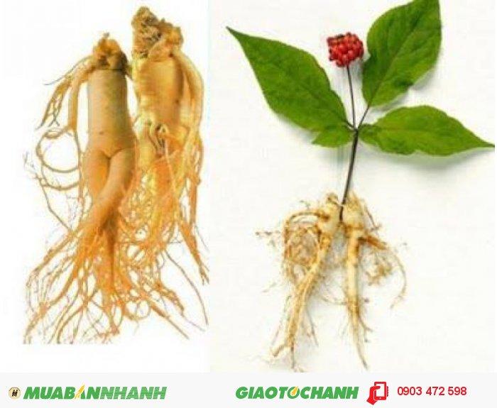 cung cấp hạt giống và củ ( cây ) giống với số lượng lớn1