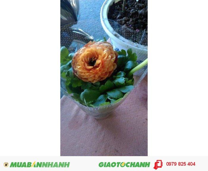 Hoa mao lương đẹp rẻ1