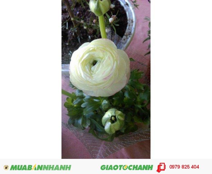 Hoa mao lương đẹp rẻ2