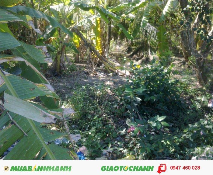Bán đất nền DT 500m2 p.Phú Tân - TP. Bến Tre