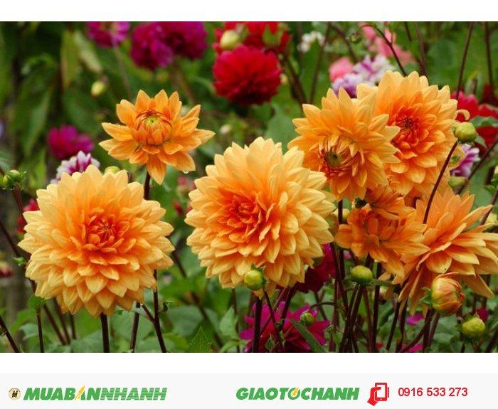 Đất trồng cây cảnh, hoa tại Hà nội0