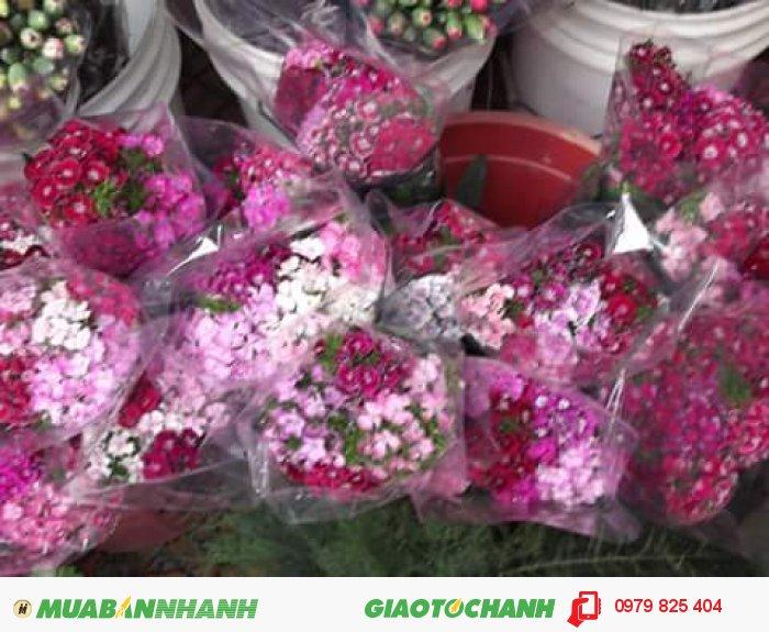Hoa cẩm chướng Đà Lạt3