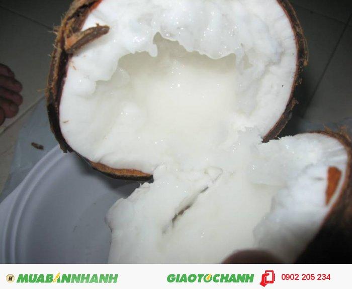 Dừa sáp đặc sản Trà Vinh thơm ngon0
