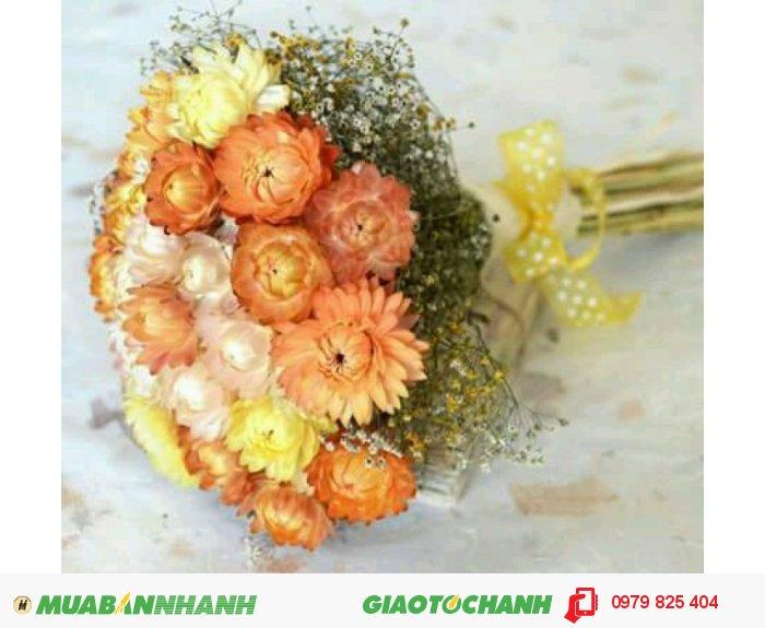 Gỉo hoa bất tử hình trái tim4