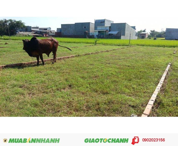 Bán gấp đất gần trung tâm xã Mỹ Hạnh Nam