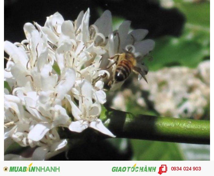 Bán mật ong1