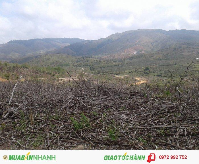 Bán gấp! đất dự án trồng keo huyện Krông Năng