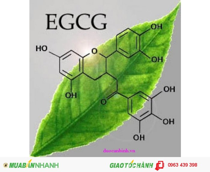 Hợp chất EGCG trong lá trà giúp ngăn ngừa ung thư, lão hóa xương,.. CHỦ ĐỘNG BẢO VỆ SỨC KHỎE3