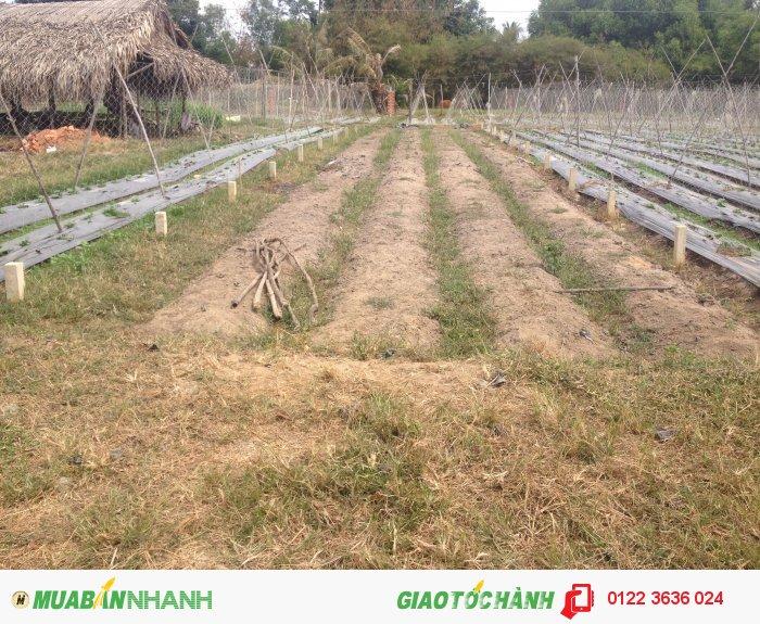 Bán đất nông nghiệp xã Vĩnh Thanh, diện tích lớn gom dần dần khoảng 10 mẫu.
