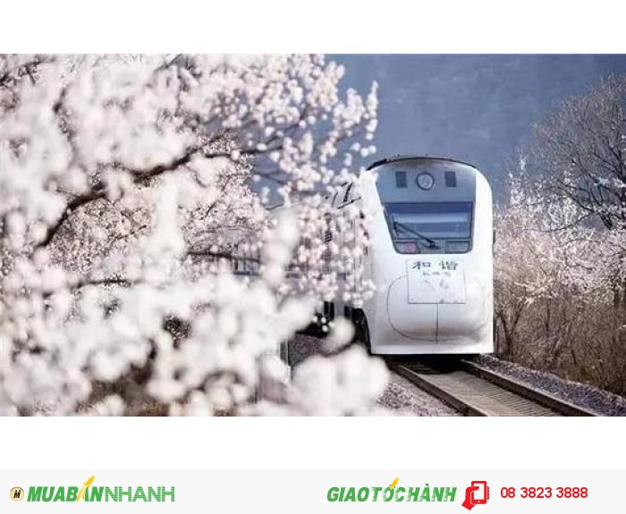 Du lịch mùa hoa Bắc Kinh