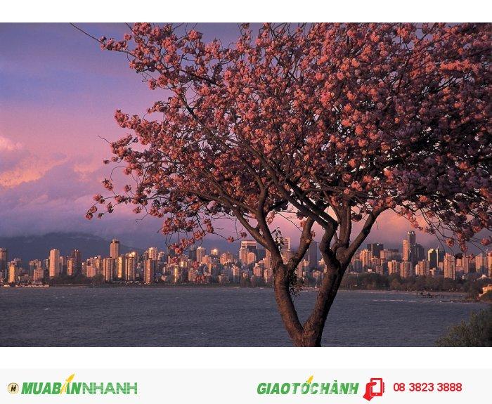 Vancouver  Ảnh: internet Giá vé khứ hồi (gồm thuế): 616 USD Thời gian khởi hành: 1/04/16-30/06/16