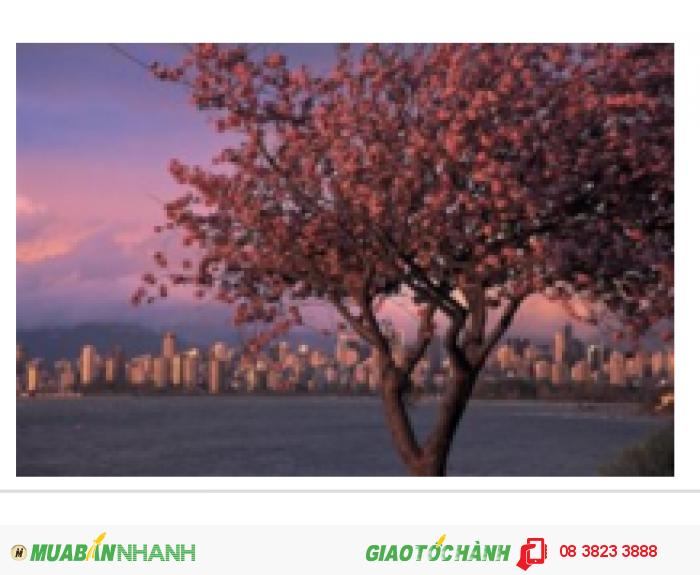 Bạn muốn mua một vé khứ hồi đến Vancouver với giá rẻ nhất? Chuyện nhỏ!