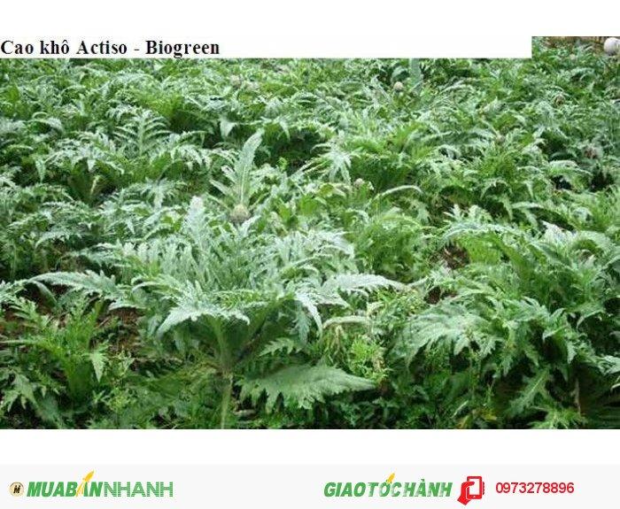 Cao khô actiso là loại cao được chiết xuất trực tiếp từ lá Actiso được trồng tại Sapa0