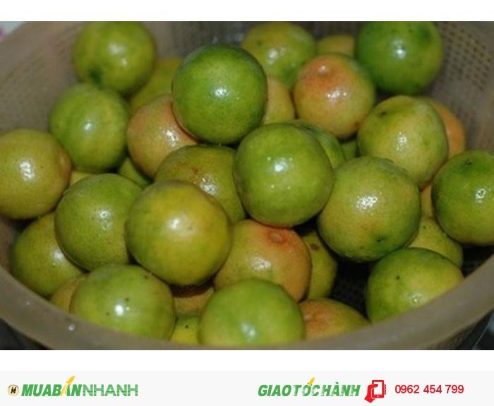 Bán giống cây chanh bốn mùa , chanh giấy limca, chanh mỹ không hạt, chanh đào, chanh trùm.0