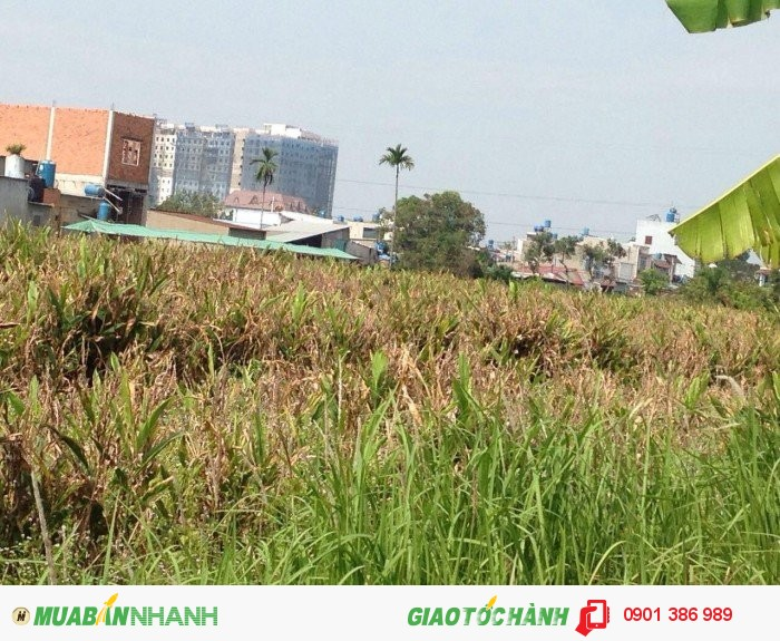 Bán lô đất 2,8tr/m2 Vườn lài, An Phú Đông, Q12
