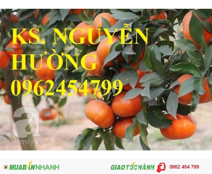 Bán giống cây cam sành gốc cam mật, cam đường canh, cam V2, cam vinh, quýt đường4