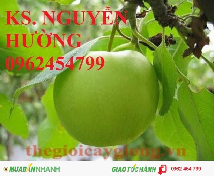 Bán giống táo thái lan, táo đại H15, táo đào vàng, táo chua gia lộc, táo ngọt H12, táo đài loan1
