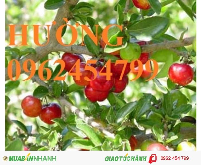 Chuyên cung cấp cây giống sơ ri1
