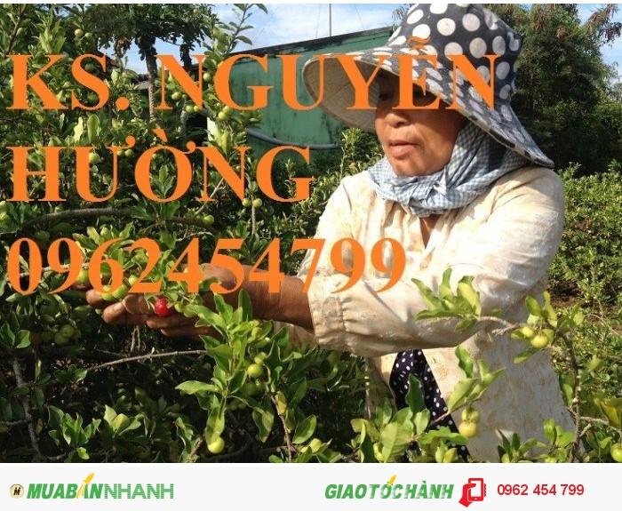 Chuyên cung cấp cây giống sơ ri3