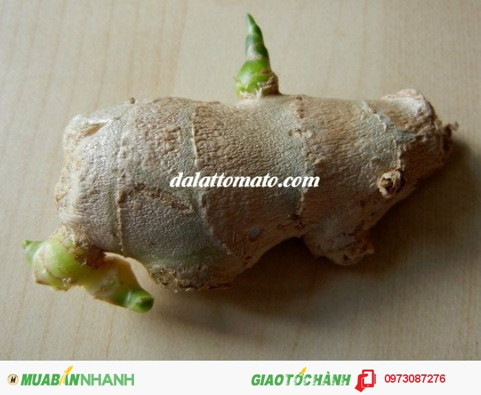 Dalattromato cung cấp các loại gừng giống, giống gừng trâu, giống gừng sẻ – gừng gió, gừng giống hơn 11 tháng, Đảm bảo nguồn gốc xuất xứ rõ ràng. có khả năng thích hợp với nhiều điều kiện khí hậu thổ nhưỡng Việt Nam cho sản phẩm có hương vị chất lượng.4