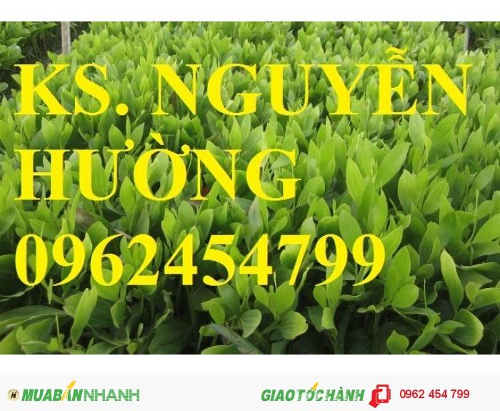 Chuyên cung cấp giống cây lâm nghiệp các loại1