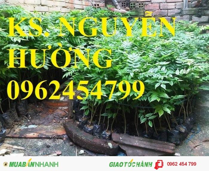 Chuyên cung cấp giống cây lâm nghiệp các loại2