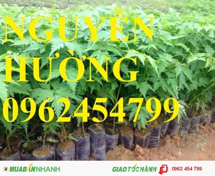 Chuyên cung cấp giống cây lâm nghiệp các loại3