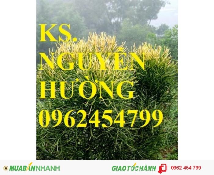 Chuyên cung cấp giống cây lâm nghiệp các loại4