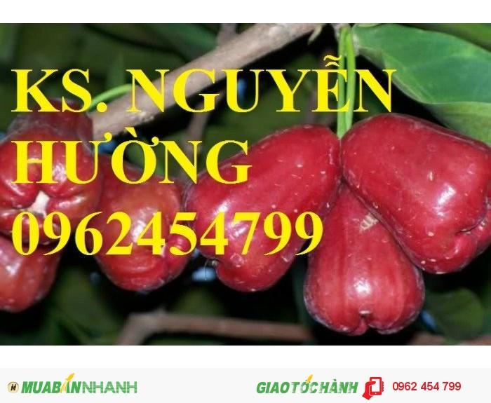Chuyên cung cấp giống cây roi thái đỏ1