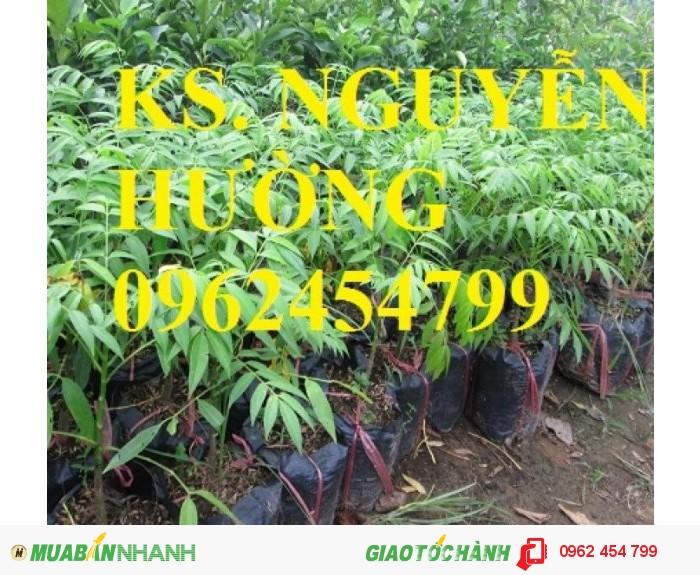 Chuyên cung cấp giống cây cóc bao tử không hạt chất lượng cao2
