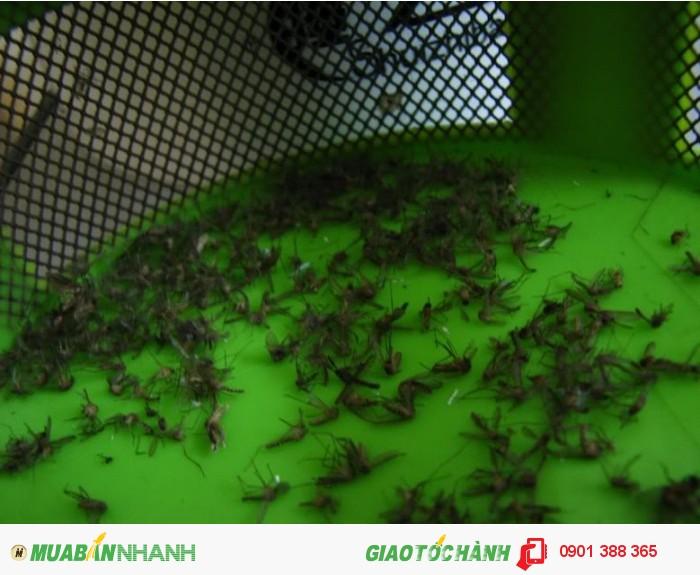- Diệt muỗi tận gốc.