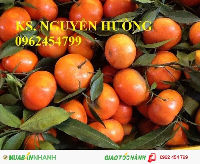 Chuyên cung cấp giống cây cam đường canh3