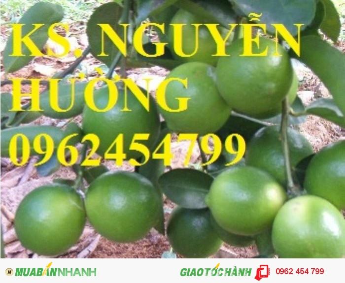 Bán giống cây chanh bốn mùa, tứ quý, chanh mỹ không hạt, chanh đào, chanh trùm, chanh giấy limca0