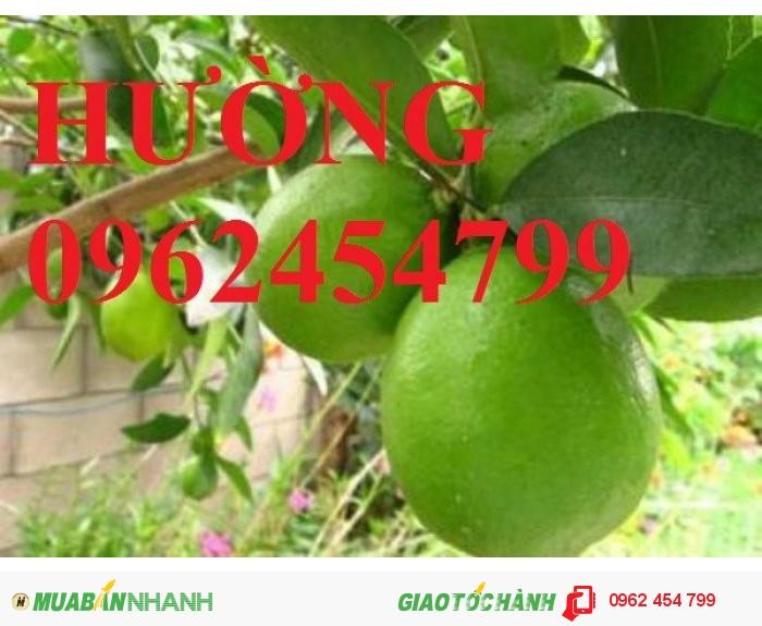 Bán giống cây chanh bốn mùa, tứ quý, chanh mỹ không hạt, chanh đào, chanh trùm, chanh giấy limca3