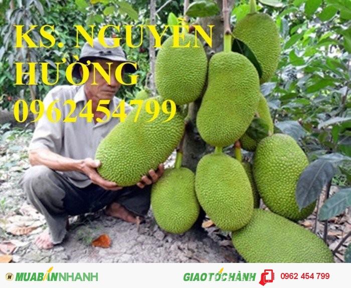 Chuyên cung cấp giống cây mít ruột đỏ, mít thái changai, mít thái không hạt, mít thái siêu sớm, Mít nghệ4