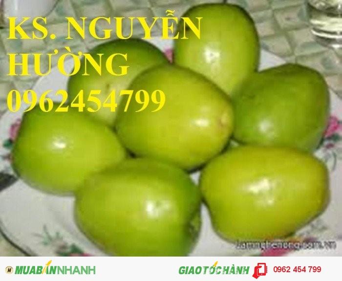 Chuyên cung cấp giống táo thái lan, táo đại, táo đài loan, táo đào vàng2