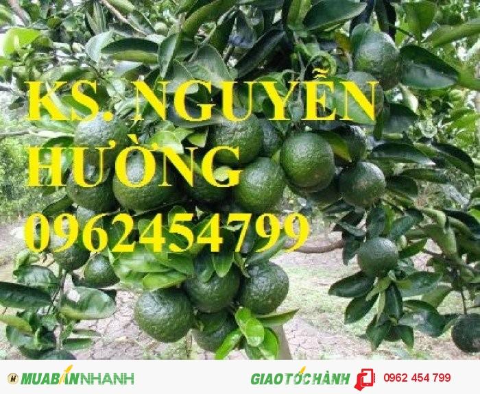Chuyên cung cấp giống cây cam sành chất lượng cao0
