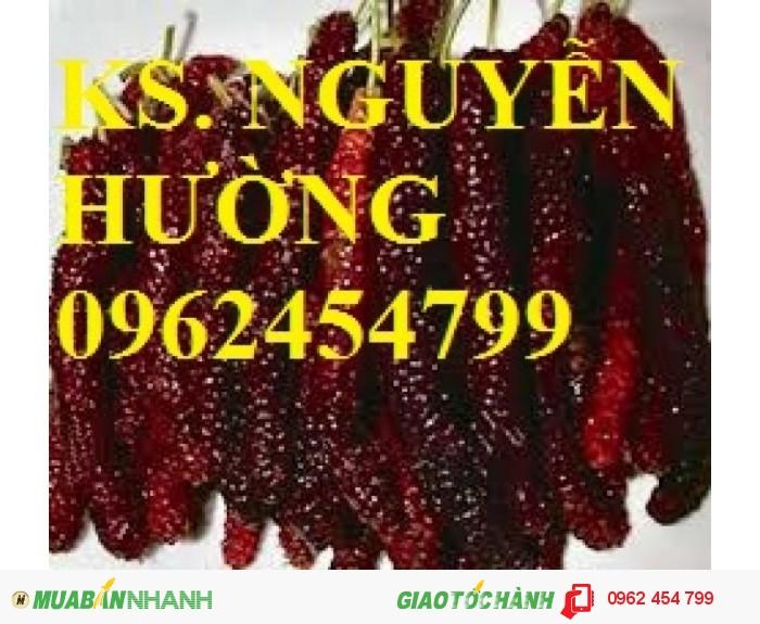 Chuyên cung cấp giống cây dâu quả dài đài loan chất lượng cao0